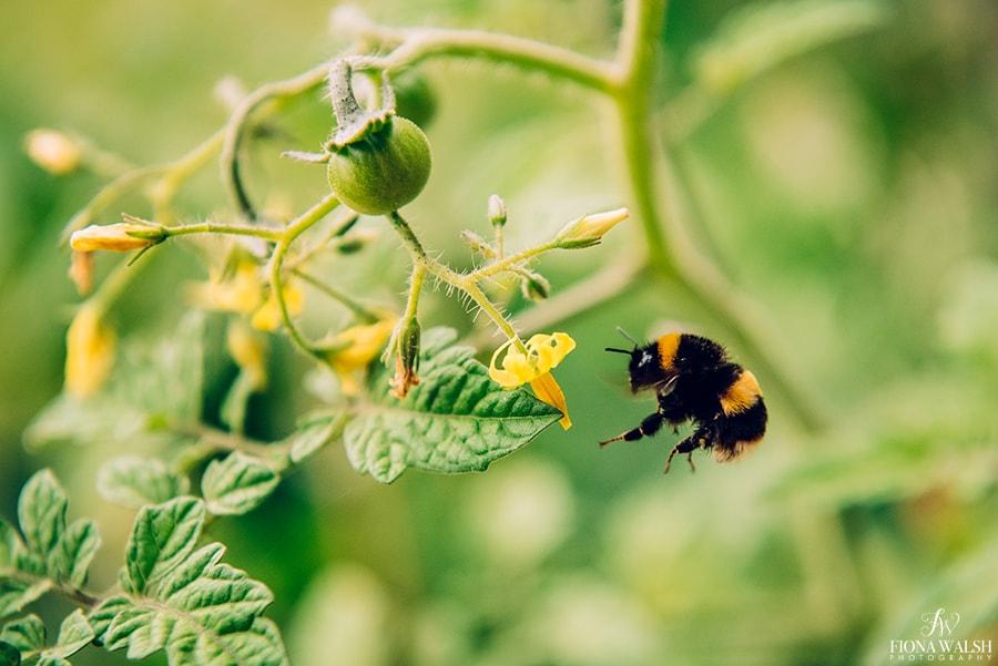 bee-photographer-somerset