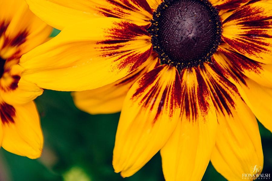 plant-photographer-somerset