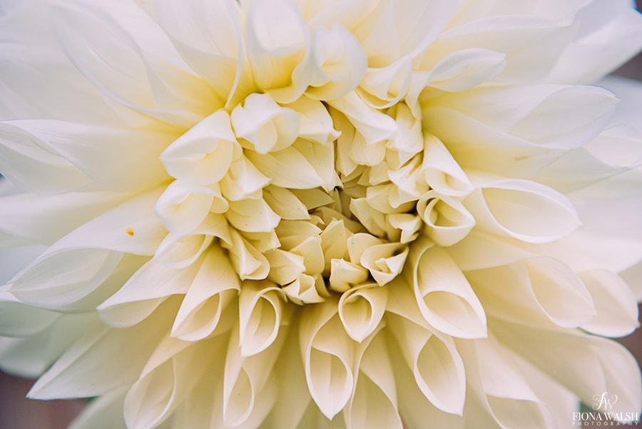 botanical-photography-prints2