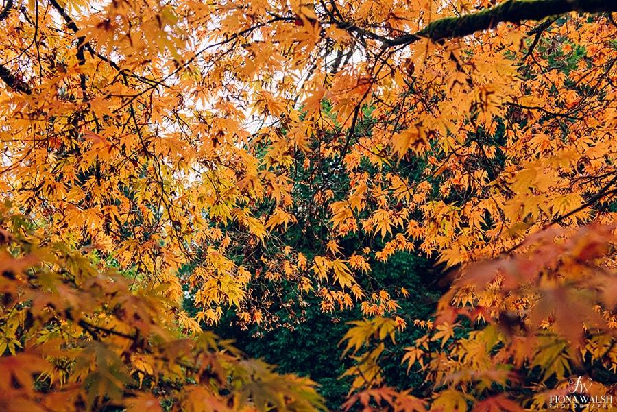 tree-photographer-uk
