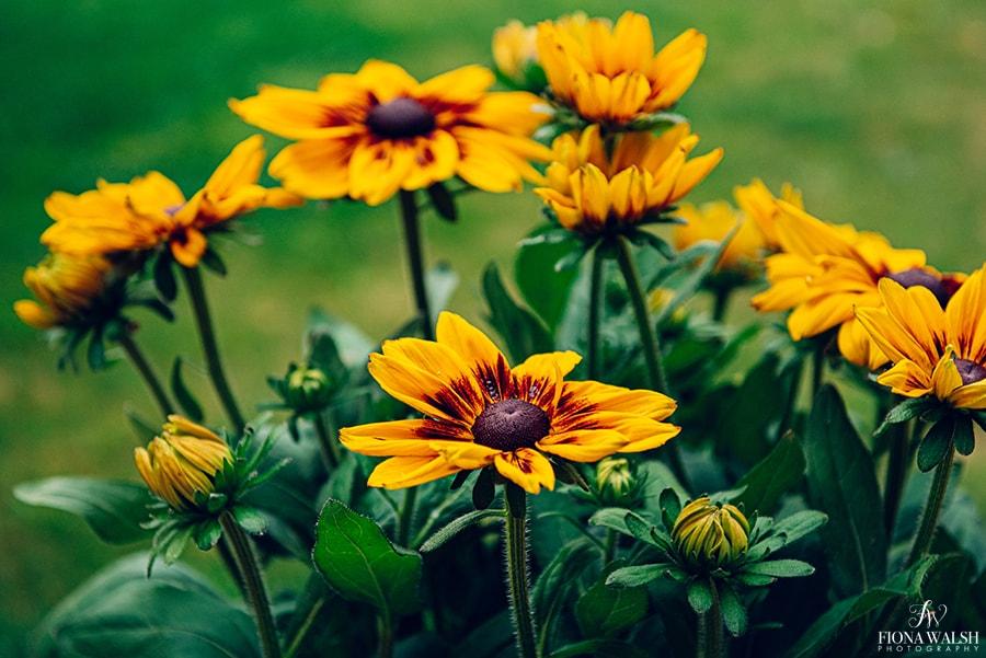 plant-photographer-somerset2