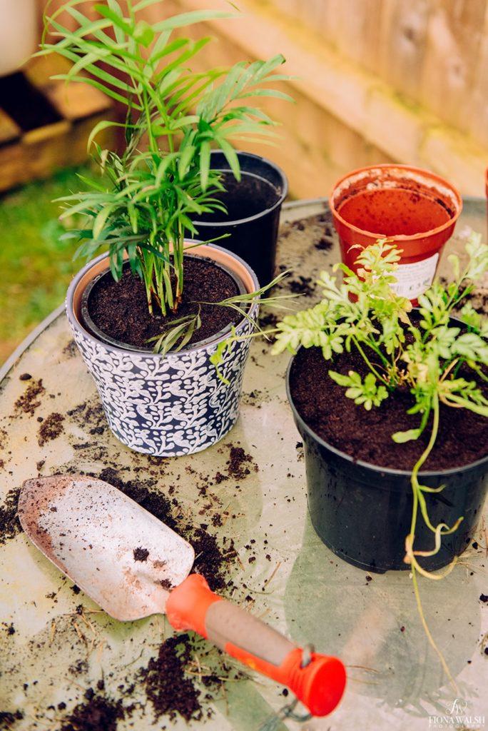 garden-photographer-somerset2