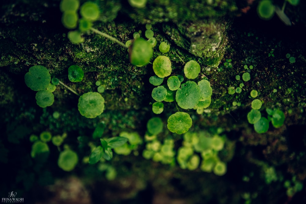 nature-photographer-somerset